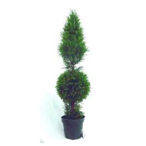 National Tree Company LCYT 700 48 48 Inch Juniper Cone and